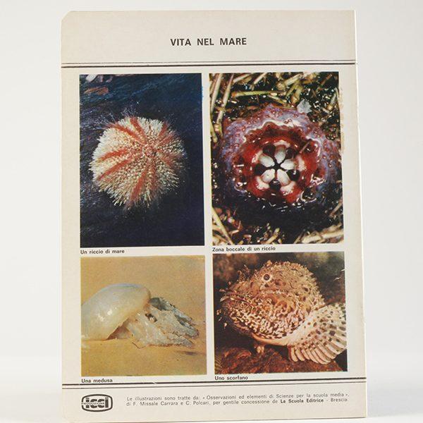 ricerche-sulla-natura-vita-nel-mare-2-_600_600