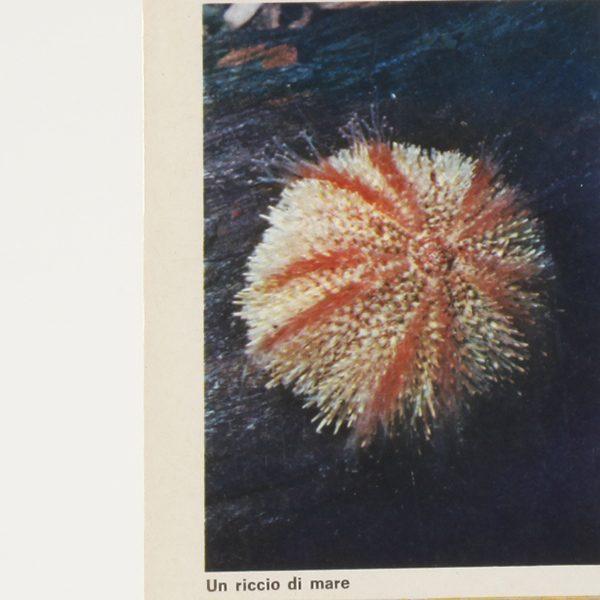 ricerche-sulla-natura-vita-nel-mare-2600_600_3