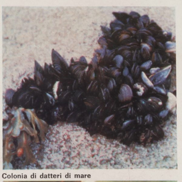 ricerche-sulla-natura-vita-nel-mare-600_600_3