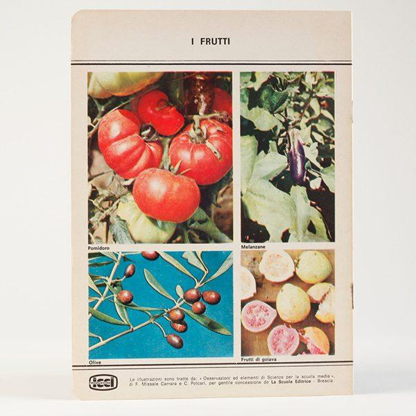ricerche_frutti_600_600_2